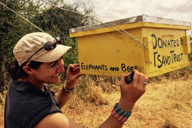 elephants and bees project africa